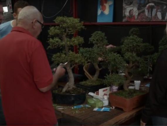 Arts & Ants Aalsmeer | koi, bonsai en vijver specialist | bonsai cursus